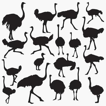 Struisvogel silhouetten