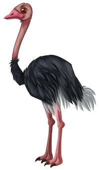 Struisvogel staande