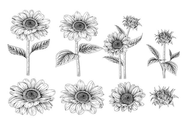 Sunflower elements tekeningen