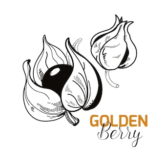 Super voedsel gouden bes schets stijl geïsoleerde illustratie