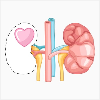 Symbolen voor nierbewustzijn vectorillustratie