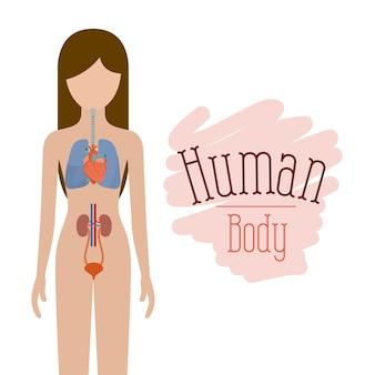 Systemen van het menselijk lichaam