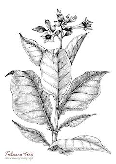 Tabak boom hand tekenen vintage stijl
