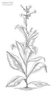Tabaksboom hand tekenen gravure stijl