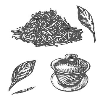 Tak en theebladeren groene thee vector hand getekende illustratie