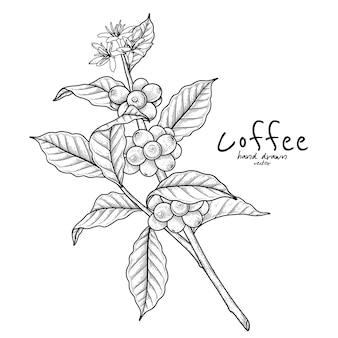 Tak van koffie met fruit en bloemen handgetekende illustratie