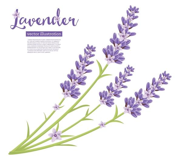 Tak van lavendel bloemen illustratie.