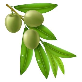 Tak van olijfboom met groene olijven