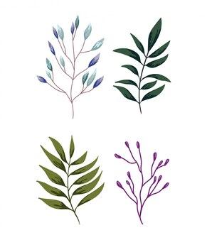 Takken gebladerte vegetatie groen natuur ontwerp