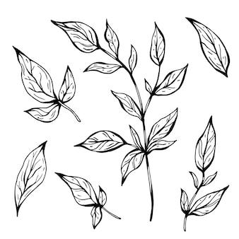 Takken met bladeren. hand getekend vectorillustratie. zwart-wit zwart-witte inktschets. lijn kunst. geïsoleerd op een witte achtergrond. kleurplaat.