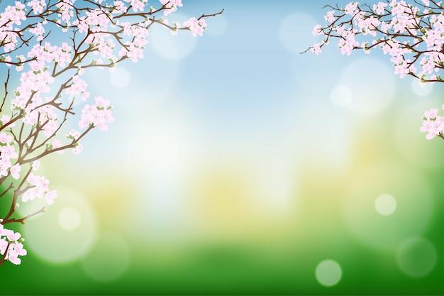 Takken van de bloem die van de kersenlente op burry bokeh bloeien