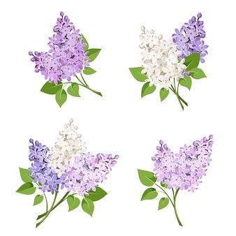 Takken van lila bloemen. illustratie.