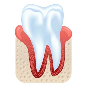 Tand- en tandvleesstructuur. realistische tand geïsoleerde illustratie.