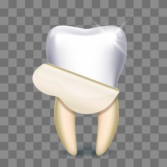 Tandfineer die geïsoleerde tandtechnicus witten