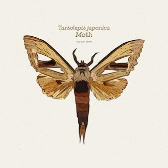 Tarsolepis japonica-illustratie