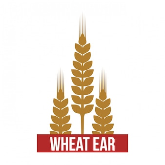 Tarwe oor