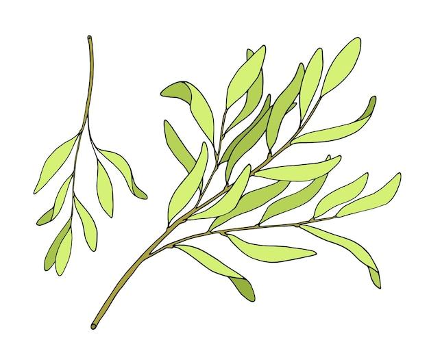 Tea tree bladeren set gekleurde doodle bloemen