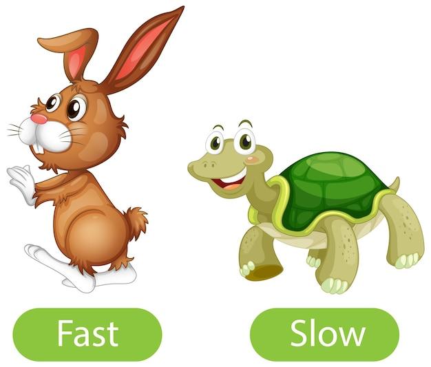 Tegenover bijvoeglijke naamwoorden met snel en langzaam