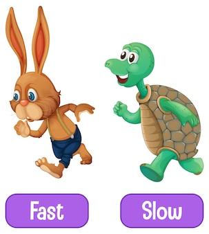 Tegenover bijvoeglijke naamwoorden woorden met snel en langzaam