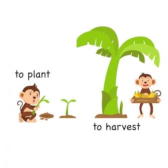 Tegenover om te planten en vectorillustratie te oogsten