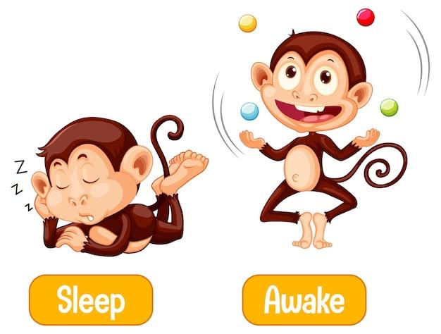 Tegenover woorden met slaap en wakker