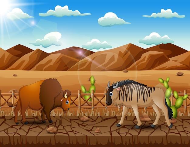 Teken een bizon en een gnoe in het droge landlandschap