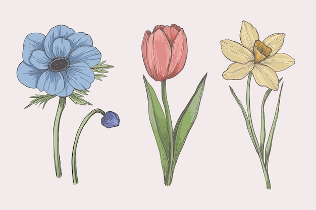 Tekening met vintage plantkunde bloemencollectie