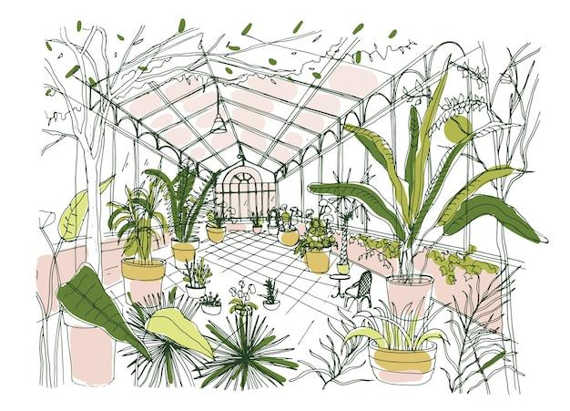 Tekening van interieur van tropische botanische tuin vol gecultiveerde planten met weelderig gebladerte