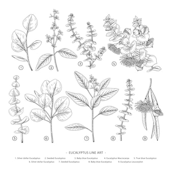 Tekeningen van eucalyptustakken.