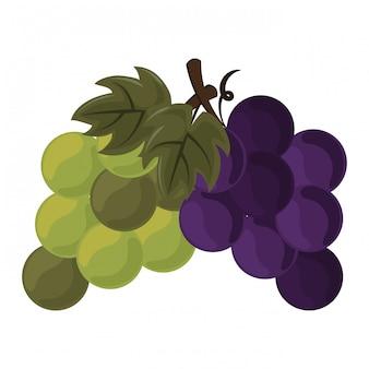 Thanksgiving dag fruit