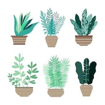 Thuis kamer planten in potten