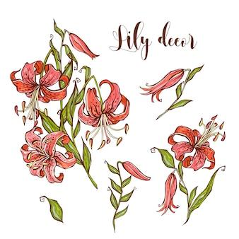 Tiger lily-bloemenset voor uw ontwerp. vector illustratie.