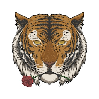 Tijger bijten roos illustratie