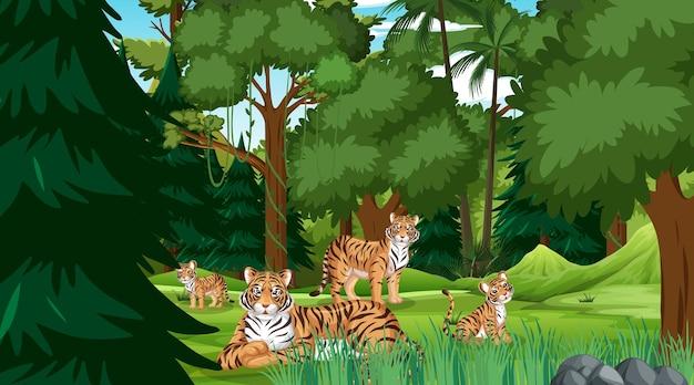 Tijgerfamilie in bos- of regenwoudscène met veel bomen