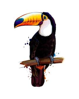 Toekan, tropische vogel uit een scheutje aquarel, gekleurde tekening, realistisch. vector illustratie van verven
