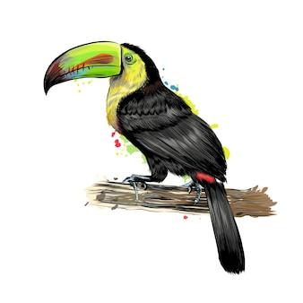 Toekan, tropische vogel uit een scheutje aquarel