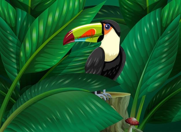 Toekan verborgen in de tropische bladerenachtergrond