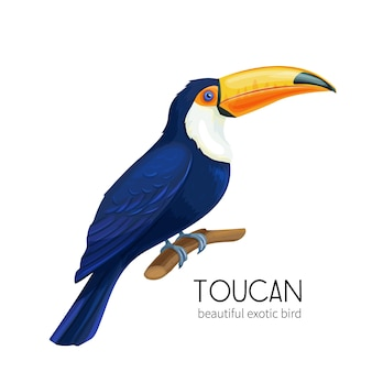 Toekanvogel