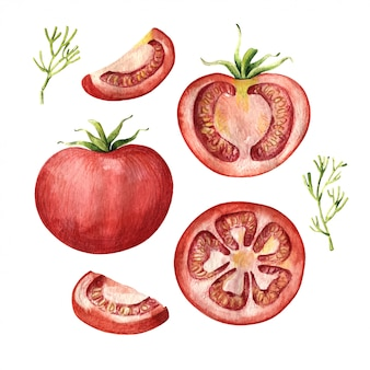 Tomatenset, geheel, half en gesneden, boven- en zijaanzicht
