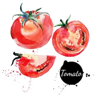 Tomatenset. hand getekend aquarel op witte achtergrond. vector illustratie