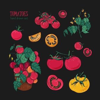 Tomatensoorten, met de hand getekende set. tak, bloemen, struik, deel in een snee