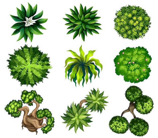 Topview van de verschillende planten