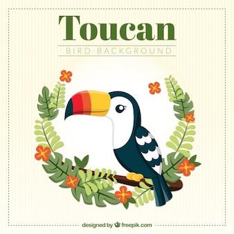 Toucan achtergrond