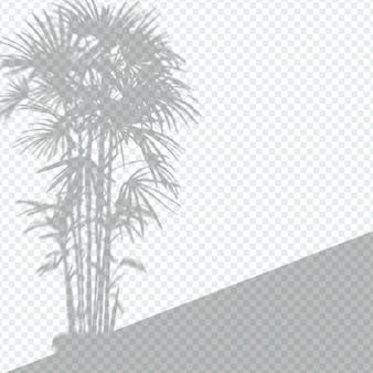 Transparant plantenschaduw-overlay-effect