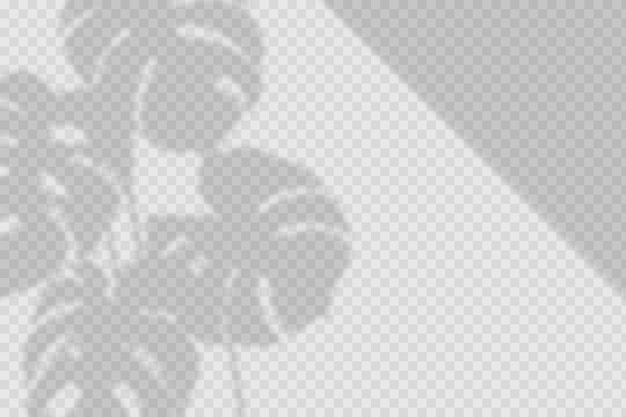 Transparant schaduwen-overlay-effect met bladeren
