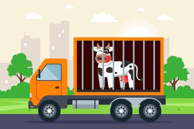 Transport van vee per vrachtwagen.