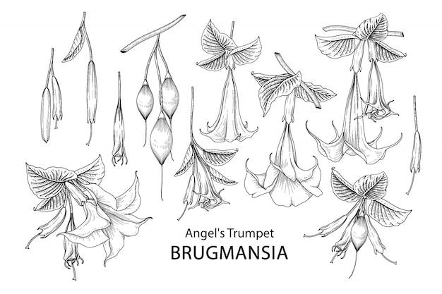 Trompetbloem brugmansia-tekeningen