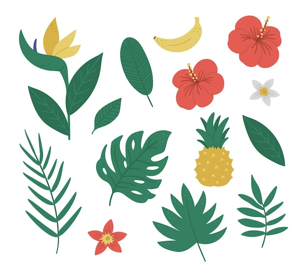 Tropisch fruit, bloemen en bladeren illustraties