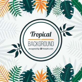 Tropische achtergrond met verschillende bladeren