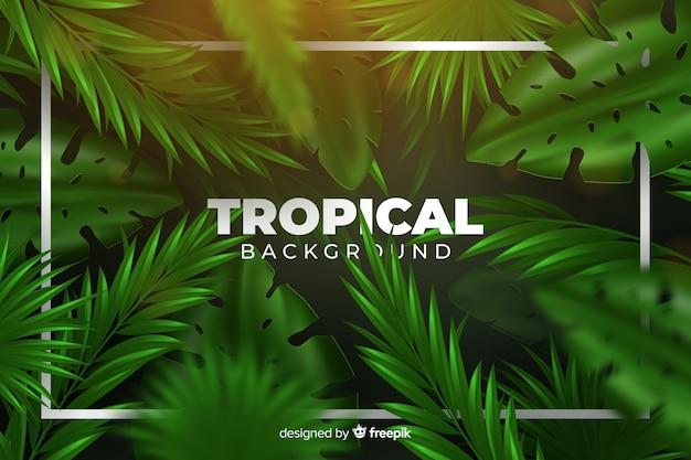 Tropische achtergrond